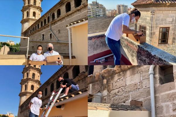 La campaña se desarrolla principalmente en el casco antiguo de la ciudad donde un grupo de voluntarios instala cajas nido.