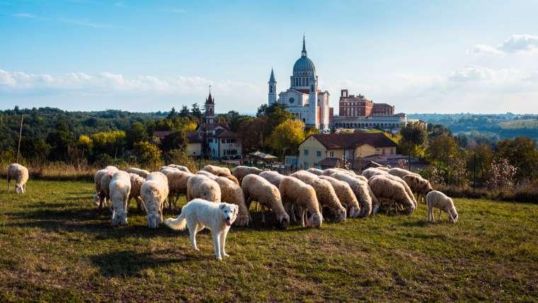 """""""Se compadeció de ellos porque eran como ovejas sin pastor"""" (Mc 6, 30-34)"""